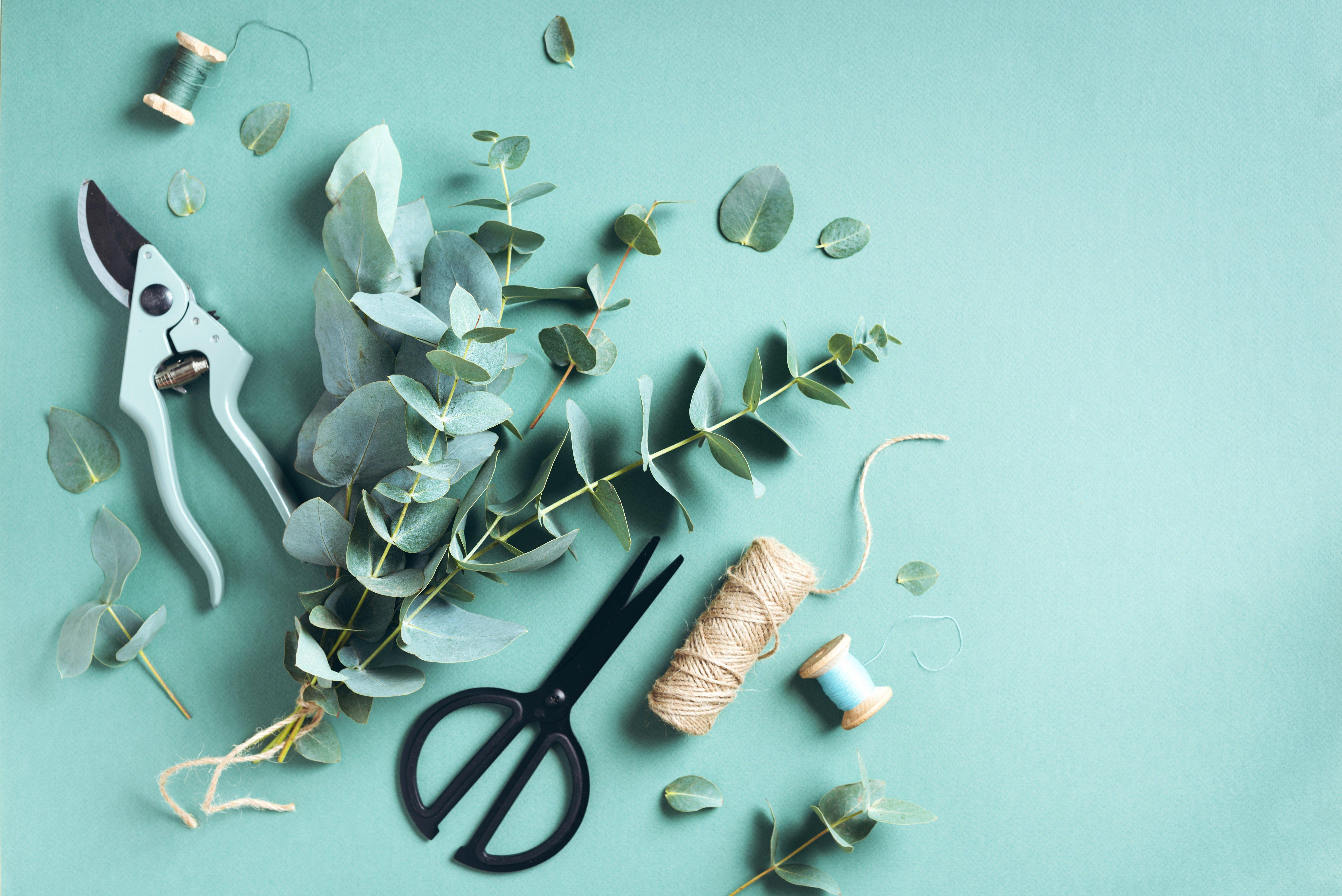BLOG Scissors